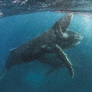 """Unser Planet - Erster Teaser zur Naturdoku von den """"Planet Erde"""" Machern"""