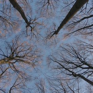 Das geheime Leben der Bäume - Trailer zur Naturdokumentation online