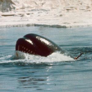 Alphas - Sam Worthington lässt Orcas gegen Haie antreten
