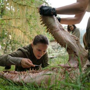 Auslöschung - Alex Garlands Film mit Natalie Portman könnte bei Netflix landen